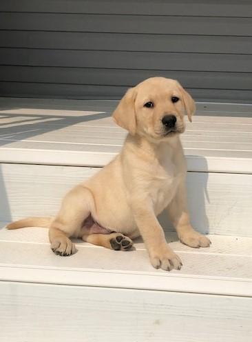 Vegas's female puppies